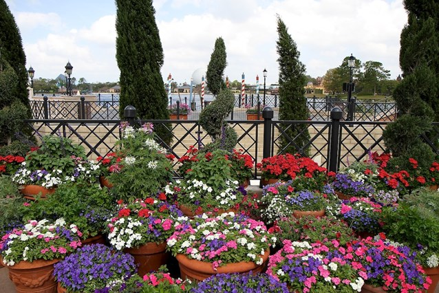 Epcot International Flower and Garden Festival - The Italy pavilion container gardens
