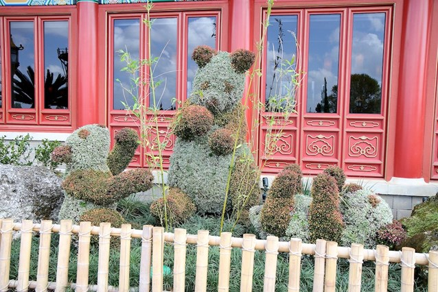 Epcot International Flower and Garden Festival - China's panda topiary