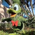 Epcot International Flower and Garden Festival - Donald Duck topiary behind Spaceship Earth