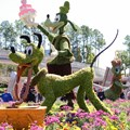 International Flower and Garden Festival - 2013 Epcot Flower and Garden Festival - Goofy and Pluto topiary