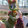 International Flower and Garden Festival - 2013 Epcot Flower and Garden Festival - Daisy topiary