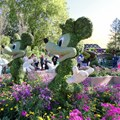 Epcot International Flower and Garden Festival - 2013 Epcot Flower and Garden Festival - Mickey and Minnie topiary at the Festival Center
