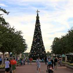 2010 Christmas Tree