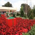 Holidays Around the World at Epcot - Topiary on the Future World to World Showcase walkway