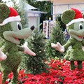 Holidays Around the World at Epcot - Epcot Main entrance decorations for 2012 - Mickey and Minnie Topiary on the Bridge to World Showcase