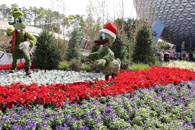 Holidays Around the World at Epcot - Epcot Main entrance decorations for 2012 - Goofy and Donald Topiary