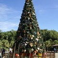 Holidays at Disney&#39;s Animal Kingdom