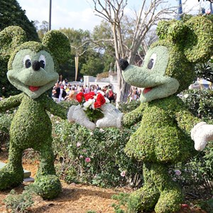 2 of 12: Limited Time Magic - Limited Time Magic True Love week - Mickey and Minnie Rose topiary
