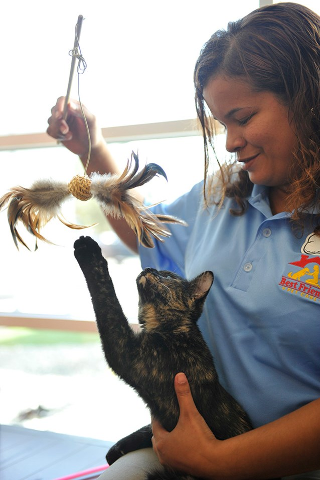 "Kennels - Boom Boom enjoys one-on-one playtime with Best Friends Pet Care associate Leonor Reynoso at ""Kitty City"" in the new Best Friends luxury pet resort. Cats can enjoy their own comfy ""kitty condos"" and amenities that include special treats like Tuna on a Ritz."