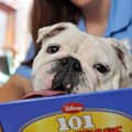 "Kennels - Best Friends Pet Care associate Whitney Jansen reads a bedtime story to Moxie in one of the new luxury resort's VIP suites. In addition to bedtime stories, dogs can enjoy DVD entertainment and TV shows like ""Animal Planet,"" as well as ice-cream treats made especially for dogs."