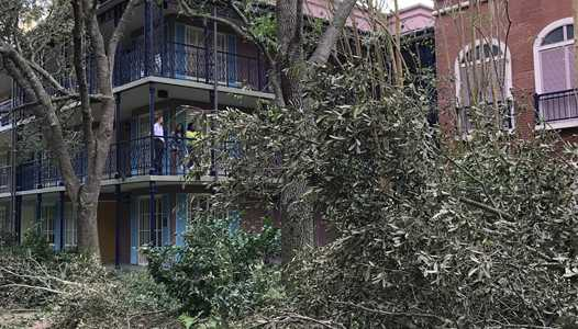 PHOTOS - Trees uprooted at Disney's Port Orleans Resort from Hurricane Irma