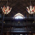 Disney&#39;s Animal Kingdom Lodge