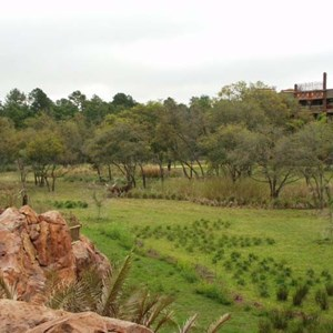 53 of 206: Disney's Animal Kingdom Lodge - Animal Kingdom Lodge preview weekend tour