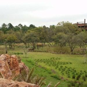 53 of 206: Disney's Animal Kingdom Lodge - Animal Kingdom Lodge preview weekend tour