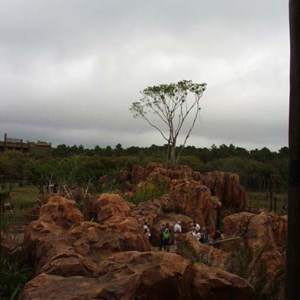 55 of 206: Disney's Animal Kingdom Lodge - Animal Kingdom Lodge preview weekend tour