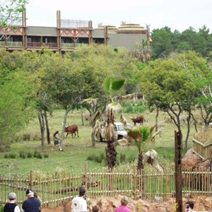 58 of 206: Disney's Animal Kingdom Lodge - Animal Kingdom Lodge preview weekend tour
