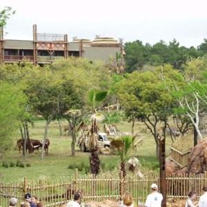 59 of 206: Disney's Animal Kingdom Lodge - Animal Kingdom Lodge preview weekend tour