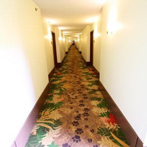 5 of 14: Disney's Art of Animation Resort - The hallway inside the Lion King section at Disney's Art of Animation Resort