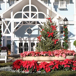 15 of 16: Disney's Beach Club Resort - Beach Club Resort holiday decorations 2009