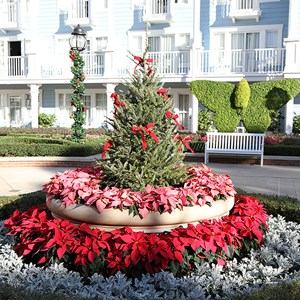 16 of 16: Disney's Beach Club Resort - Beach Club Resort holiday decorations 2009