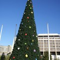 Disney's Contemporary Resort - The new 2008 Contemporary Resort Christmas tree during daytime