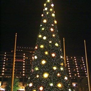 8 of 8: Disney's Contemporary Resort - The new 2008 Contemporary Resort Christmas tree lit at nighttime