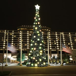 1 of 6: Disney's Contemporary Resort - The Contemporary Resort christmas tree - 70 ft tall featuring nearly 35,800 white LEDs