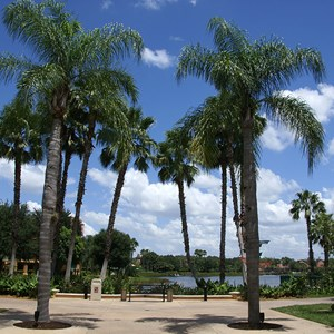 6 of 21: Disney's Coronado Springs Resort - View from Casitas building 4 to the Lago Dorado lagoon