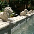 Disney's Coronado Springs Resort - Casitas area water feature