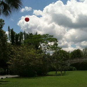 1 of 4: Disney's Polynesian Resort - Height test balloons
