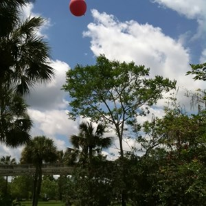 2 of 4: Disney's Polynesian Resort - Height test balloons