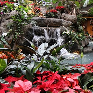1 of 6: Disney's Polynesian Resort - Disney's Polynesian Resort holiday decorations 2009