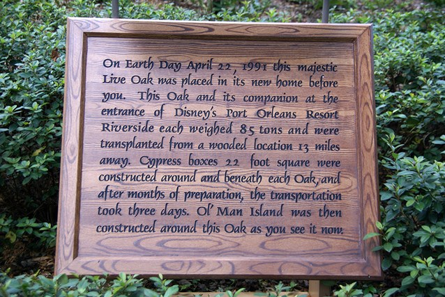 Disney's Port Orleans Resort Riverside - The Ol' Man Island giant live oak information plaque