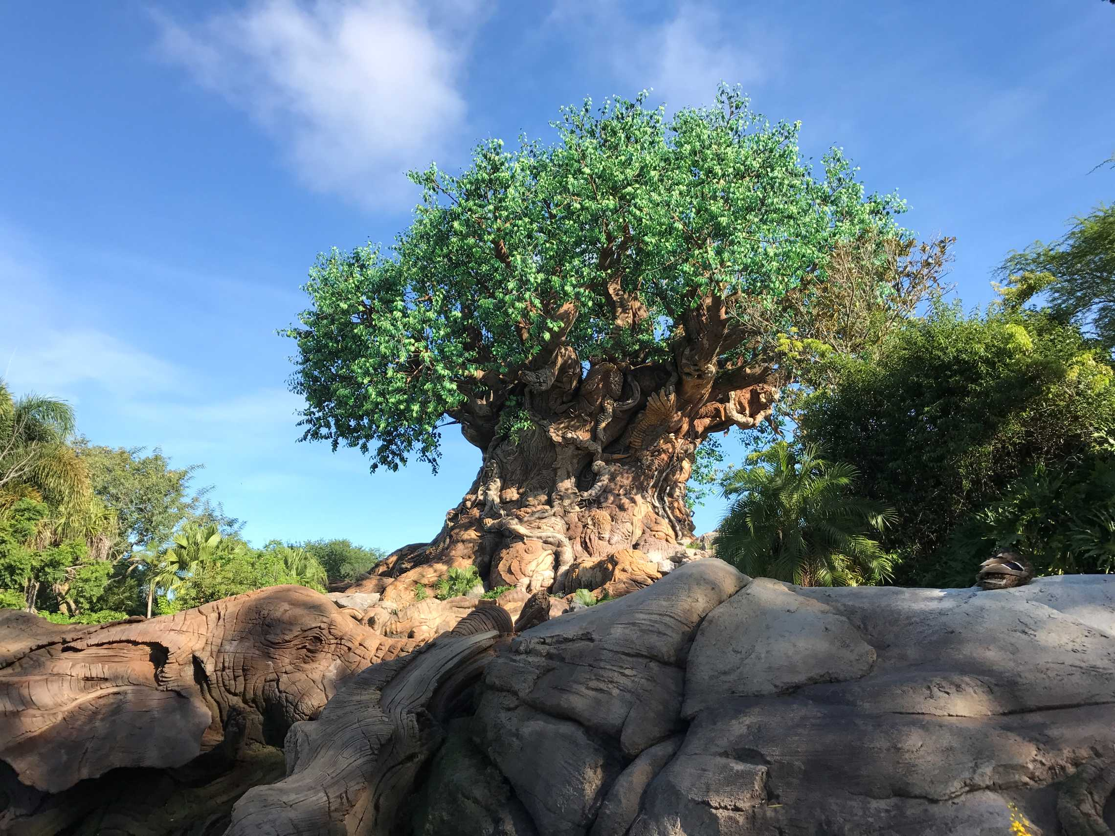 Tree of Life in sun, with the foreground rocks in shade