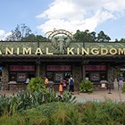 Disney&#39;s Animal Kingdom