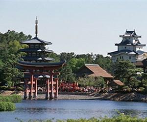 Tempura Kiku